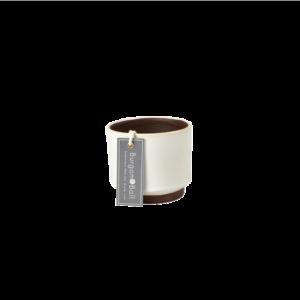 Malibu Succulent Pot Cream