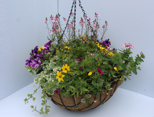 40cm coco lined hanging basket