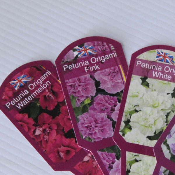 Petunia Origami 4 for £10