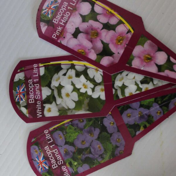 Bacopa 4 for £10
