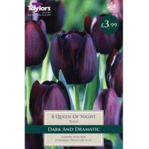Tulip Queen Of Night 8 Bulbs