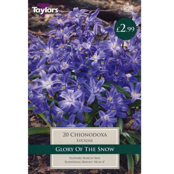 Chionodoxa Luciliae 20 Bulbs