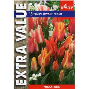 Tulip Dwarf Mix 15 Bulbs