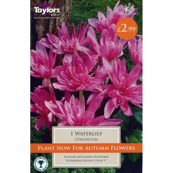 Colchicum Water Lily 1 Bulb