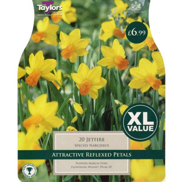 Narcissus Jetfire 20 Bulbs