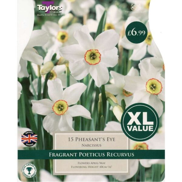 Narcissus Pheasant'S Eye 15 Bulbs