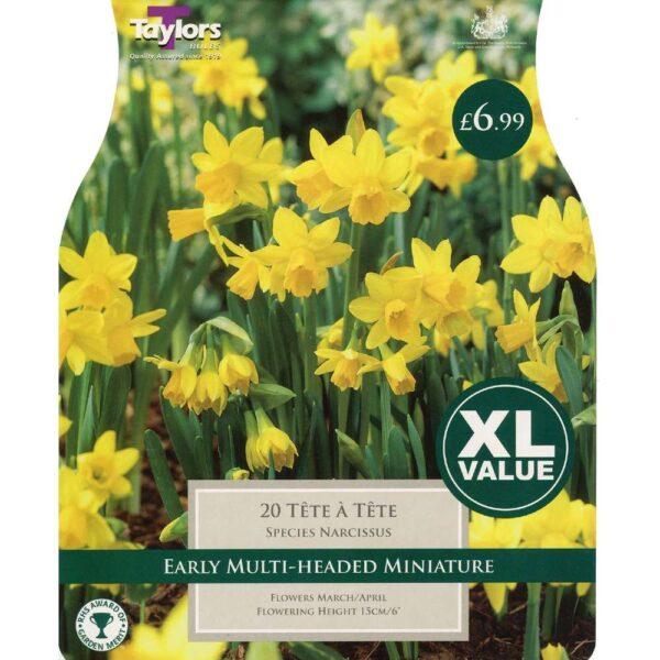 Narcissus Tete A Tete 20 Bulbs