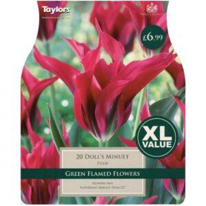 Tulip Doll'S Minuet 20 Bulbs