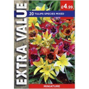 Tulip Species Mix 20 Bulbs