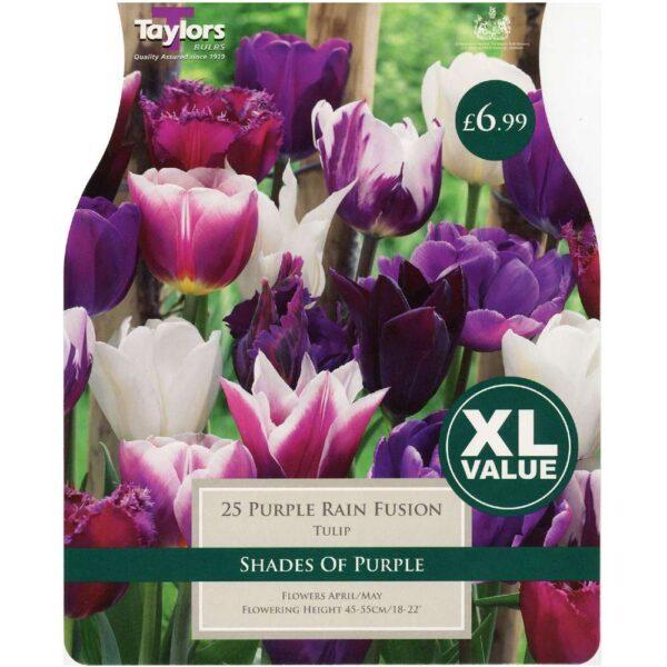 Tulip Purple Rain Fusion 25 Bulbs