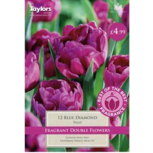 Tulip Blue Diamond 12 Bulbs