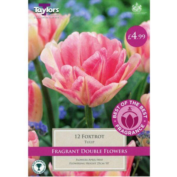 Tulip Foxtrot 12 Bulbs