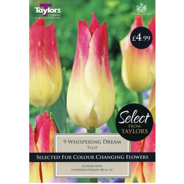 Tulip Whispering Dream 9 Bulbs