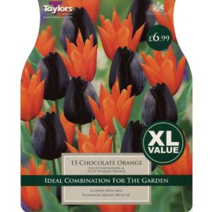 Chocolate Orange 15 Bulbs