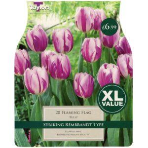 Tulip Flaming Flag 20 Bulbs