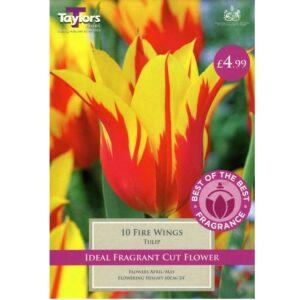 Tulip Fire Wings 10 Bulbs