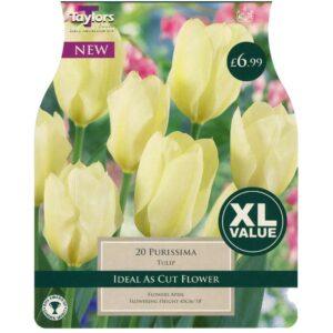 Tulip Purissima 20 Bulbs