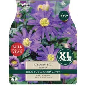 Anemone Blanda Blue 60 Bulbs