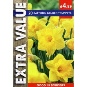 Narcissus Golden Trumpets 20 Bulbs