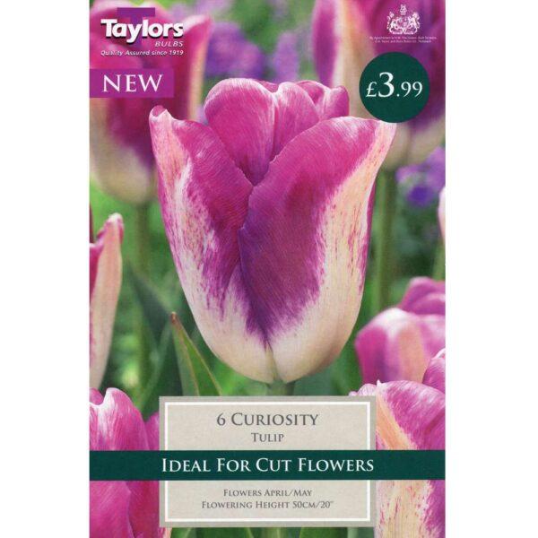 Tulip Curiosity 6 Bulbs