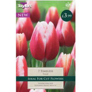 Tulip Timeless 7 Bulbs