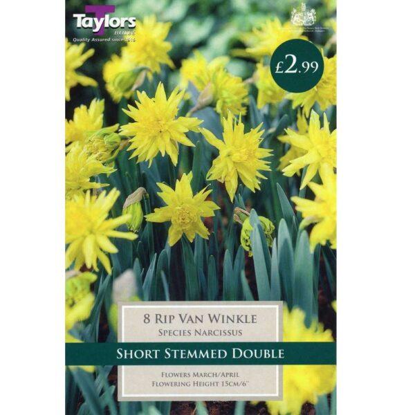 Narcissus Rip Van Winkle 8 Bulbs