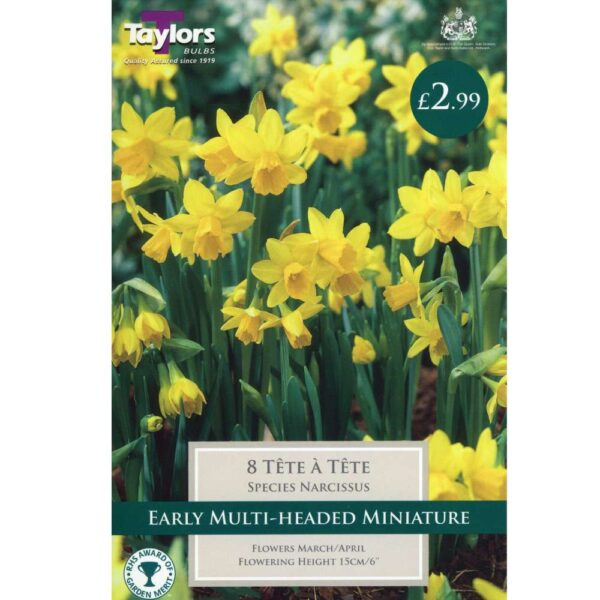Narcissus Tete A Tete 8 Bulbs