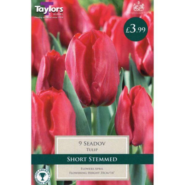 Tulip Seadov 9 Bulbs