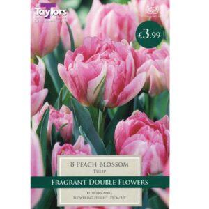 Tulip Peach Blossom 8 Bulbs