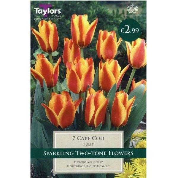 Tulip Cape Cod 7 Bulbs