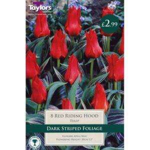 Tulip Red Riding Hood 8 Bulbs