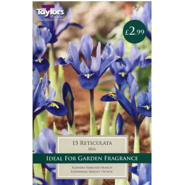 Iris Reticulata 15 Bulbs