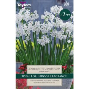 Narcissus Paperwhite 3 Bulbs