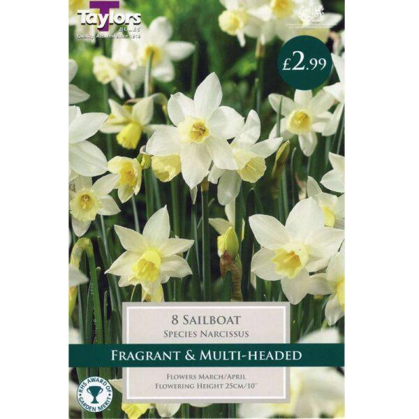Narcissus Sailboat 8 Bulbs