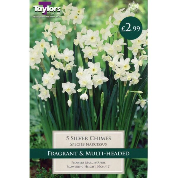 Narcissus Silver Chimes 5 Bulbs