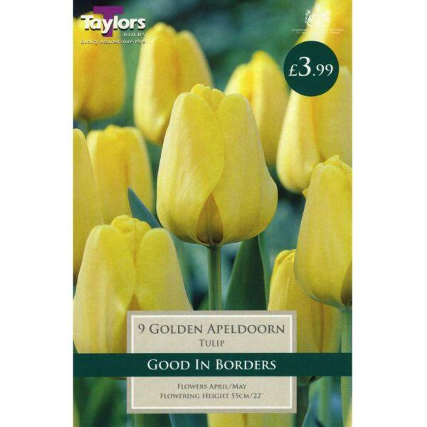 Tulip Golden Apeldoorn 9 Bulbs