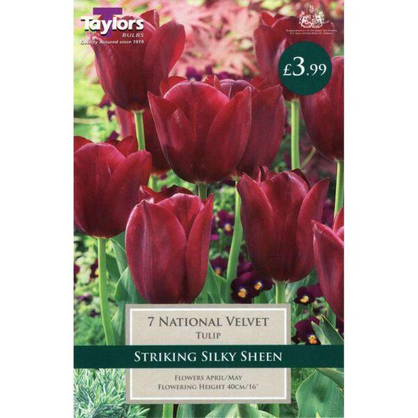 Tulip National Velvet 7 Bulbs
