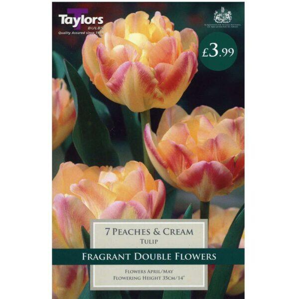 Tulip Peaches & Cream 7 Bulbs