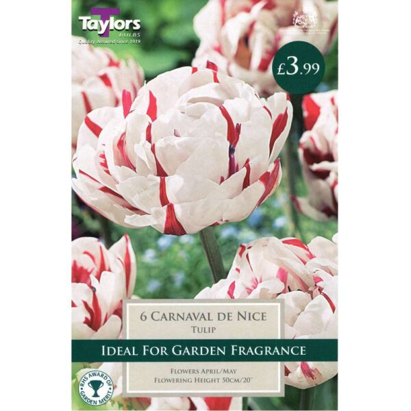 Tulip Carnaval De Nice 6 Bulbs