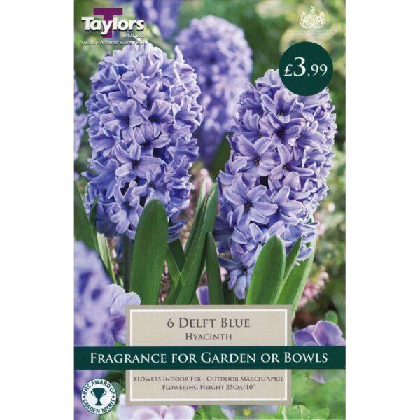 Hyacinth Delft Blue 6 Bulbs