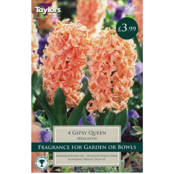 Hyacinth Gipsy Queen 4 Bulbs