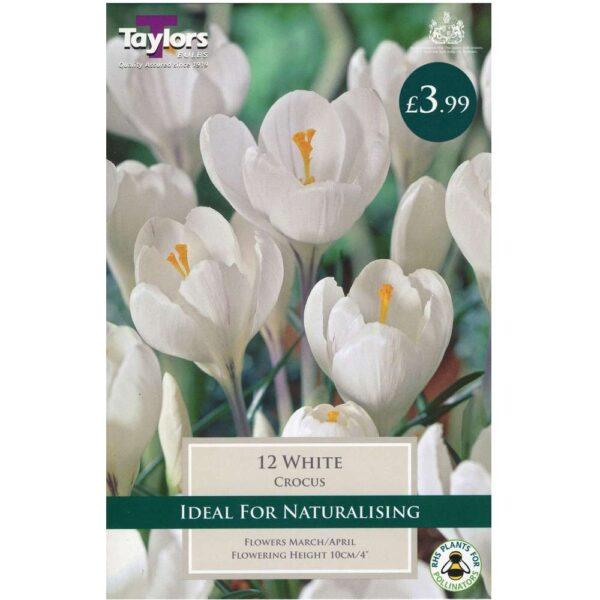 Crocus White 12 Bulbs