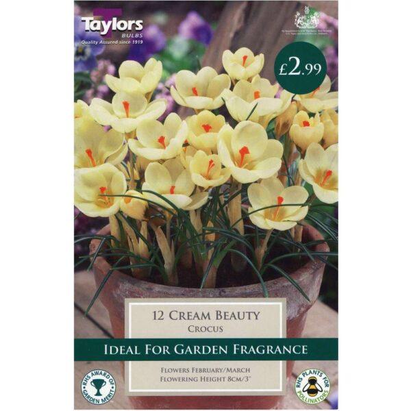 Crocus Cream Beauty 12 Bulbs