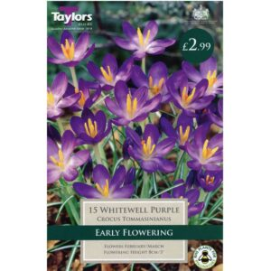 Crocus Whitewell Purple 15 Bulbs