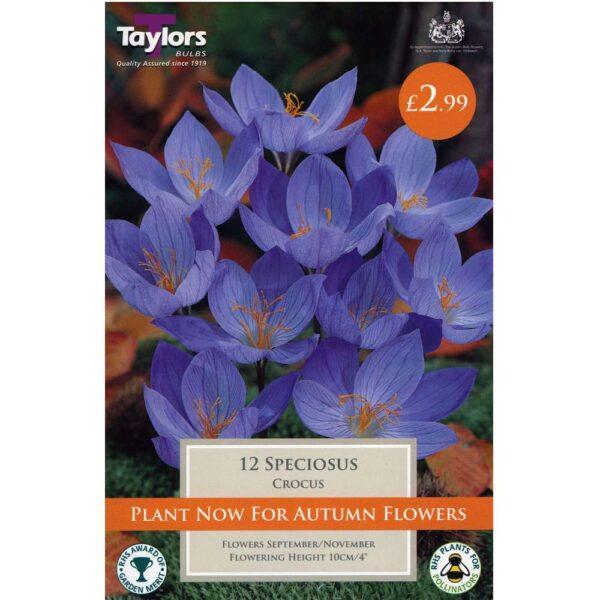 Crocus Speciosus 12 Bulbs