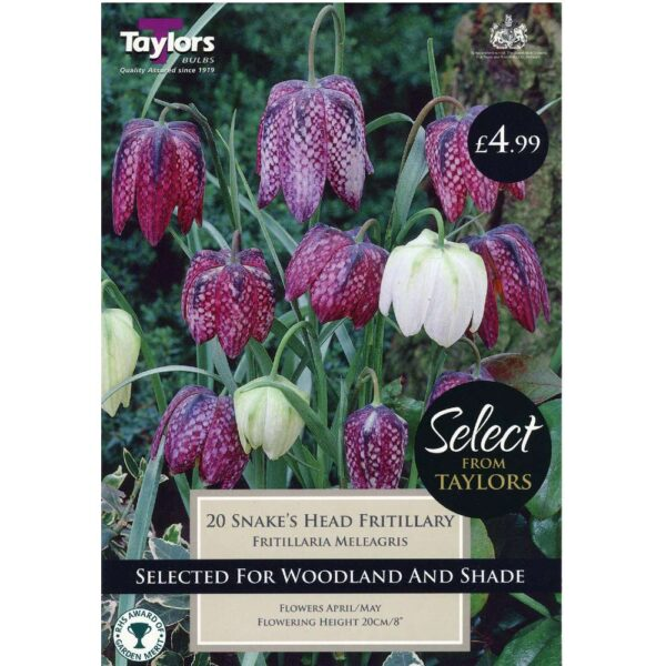 Fritillaria Meleagris 20 Bulbs