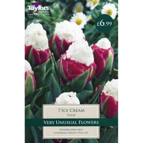 Tulip Ice Cream 7 Bulbs