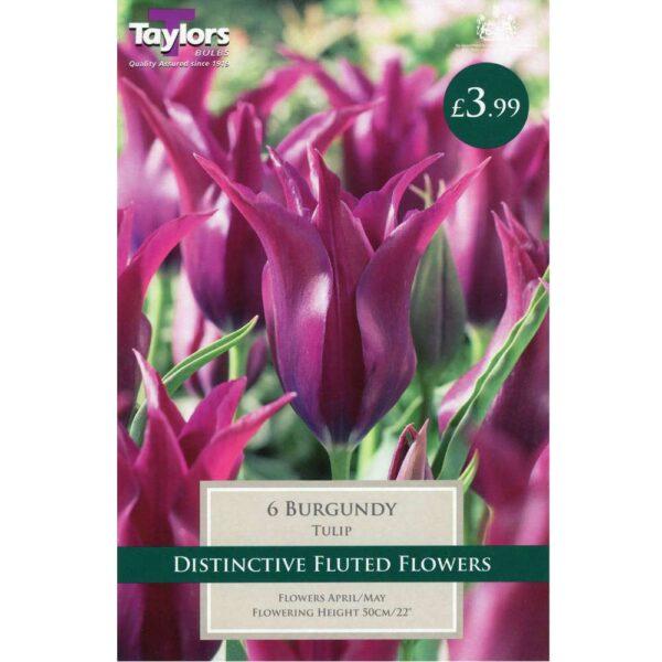 Tulip Burgundy 6 Bulbs