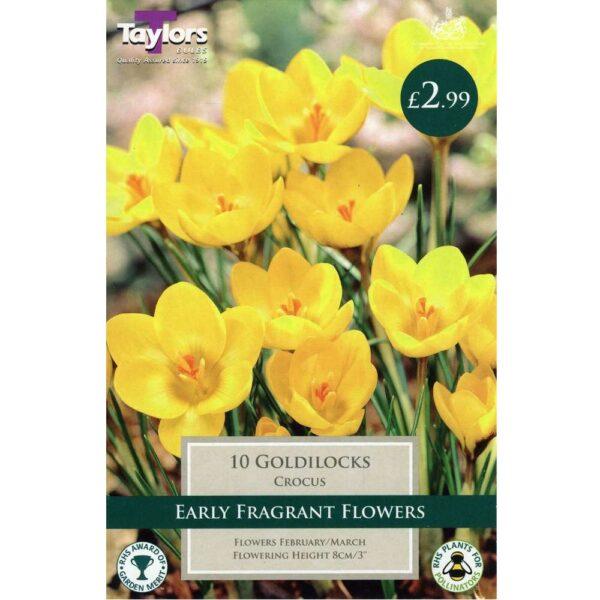 Crocus Goldilocks 10 Bulbs