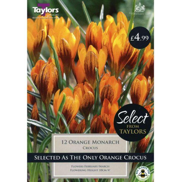 Crocus Orange Monarch 12 Bulbs